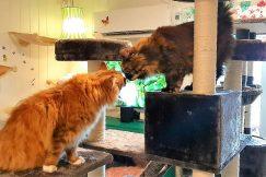 Katter i harmoni