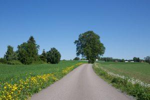 Landevei Stange